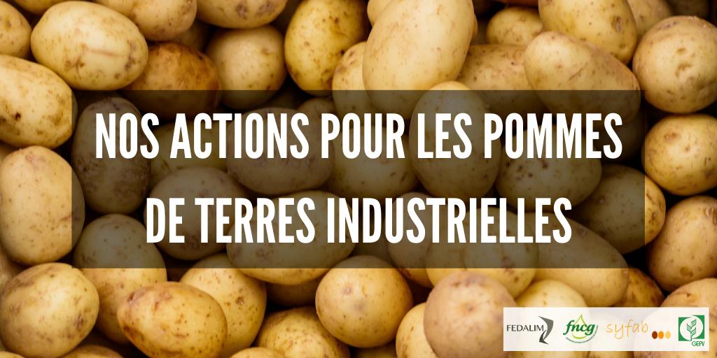 Nos actions pour les pommes de terres industrielles